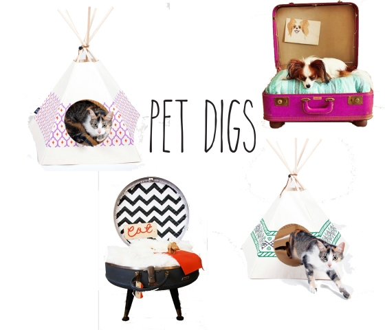 pet digs diva on a dime interiors